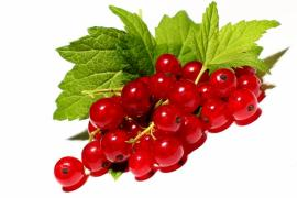Buy black currant berries currant red, currant wholesale purchase