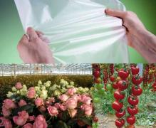 Durable film for greenhouses Vatan Plastik (Turkey)