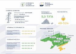 Подсолнечник Евросем АВАЛОН   AVALON OR7+