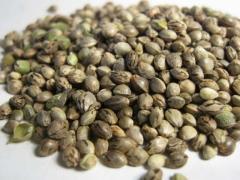 Продам семена расторопши, рыжея, льна, горчицы, др