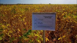 Соя семена Семена сои RR под Раундап Харди, Максус, Хайпро
