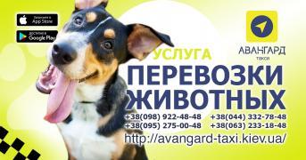 Таксі Авангард - трансфер, міжміські перевезення